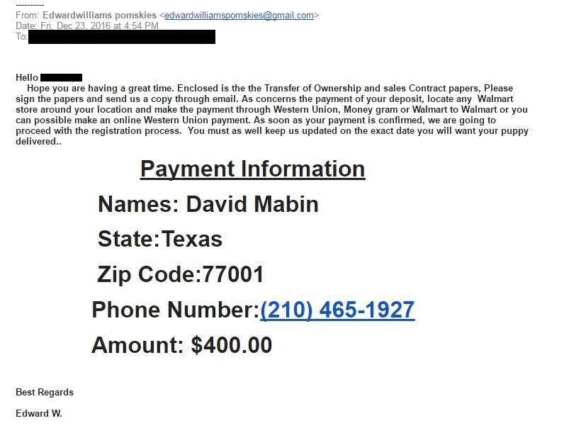 Pomsky Scam Email 4 - Pomeranian Husky Scam