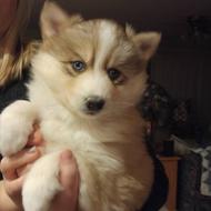 Lakeshore Puppy