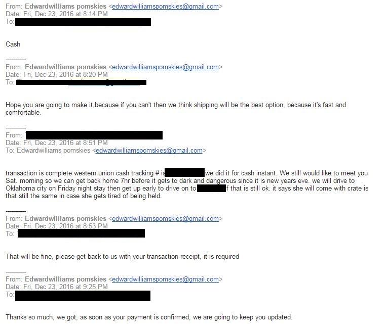 Pomsky Scam Email 6 - Pomeranian Husky Scam