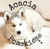 Approved Pomsky Breeders